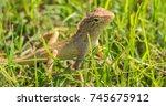 closeup picture of an oreintal... | Shutterstock . vector #745675912