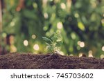 young plant on nature background | Shutterstock . vector #745703602