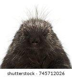 portrait of north american... | Shutterstock . vector #745712026