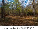 brush  brown grass and some... | Shutterstock . vector #745749916