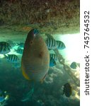 Small photo of The marvelous sea abyss of Sharm El Sheik and its thriving fish life #5