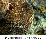 the marvelous sea bottom of... | Shutterstock . vector #745770382