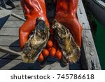 man with red gloves holding fresh oysters