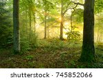 wild natural forest at sunrise  ... | Shutterstock . vector #745852066