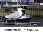 Seagul Standing On Wall  At...