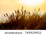 Cattails Silhouette Sunset Lak...