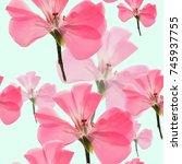geranium  pelargonium. texture... | Shutterstock . vector #745937755