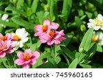 Bee Eat Gaysorn Flowers.pirk...