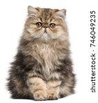Persian Kitten  3 Months Old ...
