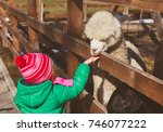 Little Girl Feeding Lama At Farm
