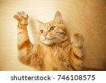 red cat raised paws up portrait ...   Shutterstock . vector #746108575
