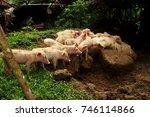 pig suckling feeding | Shutterstock . vector #746114866