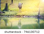 Young Deer Making A Living Near ...