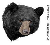 Black Bear Sketch Head Vector...