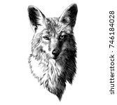 coyote sketch head vector... | Shutterstock .eps vector #746184028