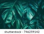 tropical jungle foliage  dark...   Shutterstock . vector #746259142