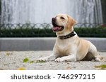 labrador retriever in the city... | Shutterstock . vector #746297215