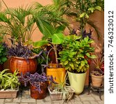 Beautiful Garden. Green Plants...