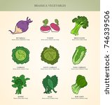 genus brassica vegetables set.... | Shutterstock .eps vector #746339506