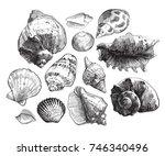 sea shells sketch set. black...   Shutterstock .eps vector #746340496