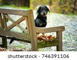 cute black mixed breed dog ... | Shutterstock . vector #746391106