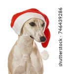 whippet sighthound christmas... | Shutterstock . vector #746439286
