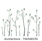 green tree branches with fresh... | Shutterstock . vector #746568196