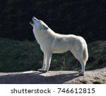 howling arctic wolf  canis... | Shutterstock . vector #746612815
