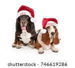 naughty and nice basset hound