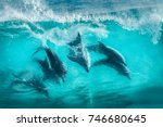 Six bottlenose dolphins surfing in waves at Sugarloaf Rocks Western Australia