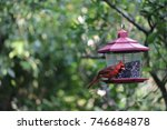 cute red male northern cardinal ... | Shutterstock . vector #746684878