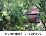 cute red male northern cardinal ... | Shutterstock . vector #746684902