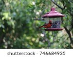 cute red male northern cardinal ... | Shutterstock . vector #746684935