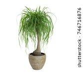 decorative beaucarnea tree... | Shutterstock . vector #746716876