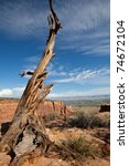 dry tree in colorado monument | Shutterstock . vector #74672104