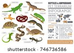 pet reptiles and amphibians... | Shutterstock .eps vector #746736586