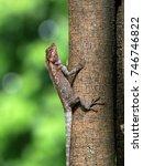 close up of sunbathing lizard.  ... | Shutterstock . vector #746746822