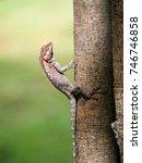 close up of sunbathing lizard.  ... | Shutterstock . vector #746746858