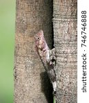 close up of sunbathing lizard.  ... | Shutterstock . vector #746746888