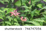 flower and green plant concept  ... | Shutterstock . vector #746747056
