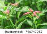 flower and green plant concept  ... | Shutterstock . vector #746747062