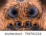 Small photo of Extreme magnification - Wolf Spider eyes (Lycosidae) at 10x magnification