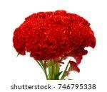 celosia flower isolated on... | Shutterstock . vector #746795338