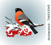 bullfinch sitting on snow... | Shutterstock .eps vector #746915545