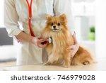 Veterinarian Doctor Using...