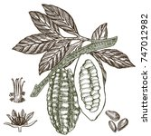 chocolate cocoa beans vector... | Shutterstock .eps vector #747012982
