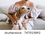 Stock photo charming beagle dog sniffs something in front of him while lying on girl s knees young woman in 747015892
