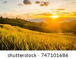 landscape of green rice fields. ... | Shutterstock . vector #747101686