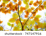 Small photo of autumn foliage
