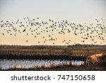 Flying Flock Of Water Birds...